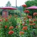 Kukkapenkissä palavarakkaus